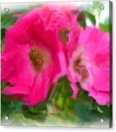 Soft Pink Flowers Acrylic Print