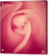 Soft Pink Rose Acrylic Print