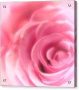 Vintage Pink Rose Acrylic Print