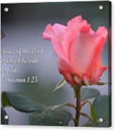 Soft Pink Rose With Scripture Acrylic Print
