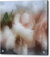 Soft Pink Roses Acrylic Print
