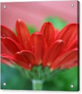 Soft Red Acrylic Print