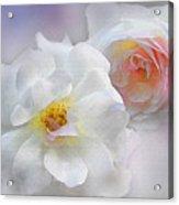 Soft Roses Acrylic Print