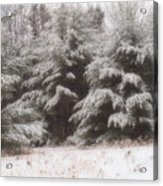 Soft Snow Acrylic Print