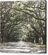 Soft Southern Day Acrylic Print