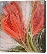 Soft Tulips Acrylic Print by Fatima Stamato