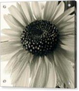 Soft White Light Acrylic Print by Trish Hale