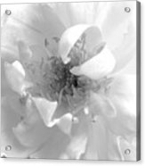 Soft White Acrylic Print