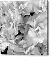 Soft Whites Acrylic Print