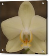 Soft Yellow Orchid Two Acrylic Print