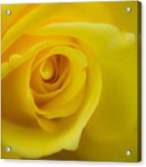 Soft Yellow Rose Acrylic Print
