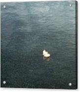 Softly Floating Plume Acrylic Print