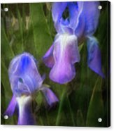 Softly Growing In The Garden Acrylic Print