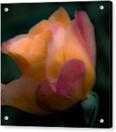 Softly Pouting Acrylic Print