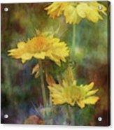 Softly Yellow 3052 Idp_2 Acrylic Print