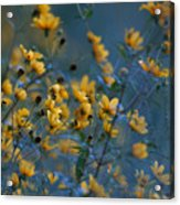 Softly Yellow And Blue Acrylic Print