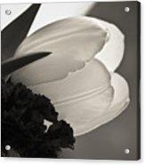 Lit Tulip Acrylic Print
