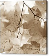 Softness Of Brown Maple Leaves Acrylic Print