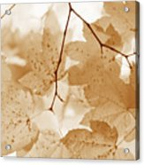 Softness Of Rusty Brown Leaves Acrylic Print