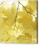 Softness Of Yellow Leaves Acrylic Print
