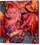 Soggy Leaves Acrylic Print