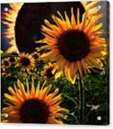 Solar Corona Over The Sunflowers Acrylic Print