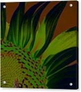 Solar Sunflower Acrylic Print