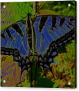 Solarized Butterfly Acrylic Print