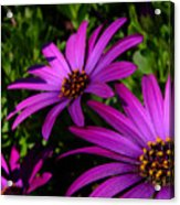 Soldiers Of Purplesse Acrylic Print