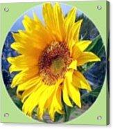 Solid Sunshine Acrylic Print