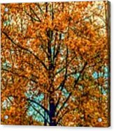 Solitary Fall Acrylic Print
