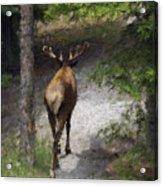 Solitary Stroll Acrylic Print