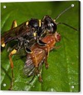 Solitary Wasp Acrylic Print