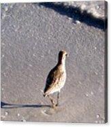 Solo Bird Acrylic Print