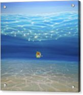 Solo Under The Turquoise Sea Acrylic Print