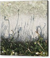 Some Peoples Weeds Acrylic Print