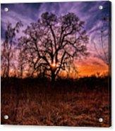 Somenos Oak Acrylic Print