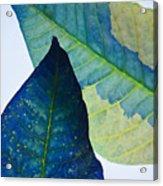 Something Blue Acrylic Print by Bobby Villapando