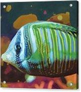 Something Fishy Acrylic Print