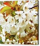 Something Magical About Spring Acrylic Print