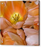Somewhat Peachy Acrylic Print