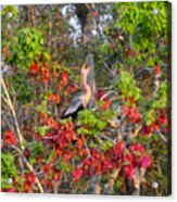 Song Of The Anhinga Acrylic Print