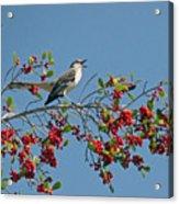 Song Of The Mockingbird Acrylic Print