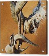 Song Sparrow And Milkweed Acrylic Print