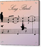 Songbirds With Border Acrylic Print