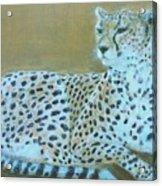 Sonia The Cheetah II Acrylic Print