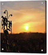 Sonnenuntergang Acrylic Print