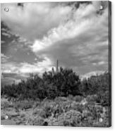 Sonoran Afternoon H10 Acrylic Print