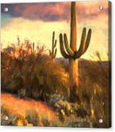 Sonoran Desert Morn Acrylic Print