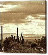Sonoran Desert Mountains And Cactus Near Phoenix Acrylic Print
